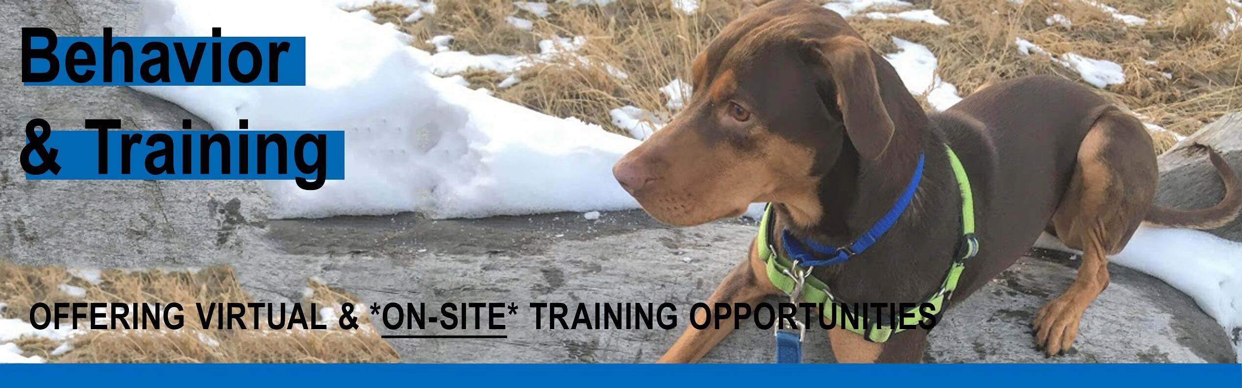 Click to Learn More about Training at HSSPV